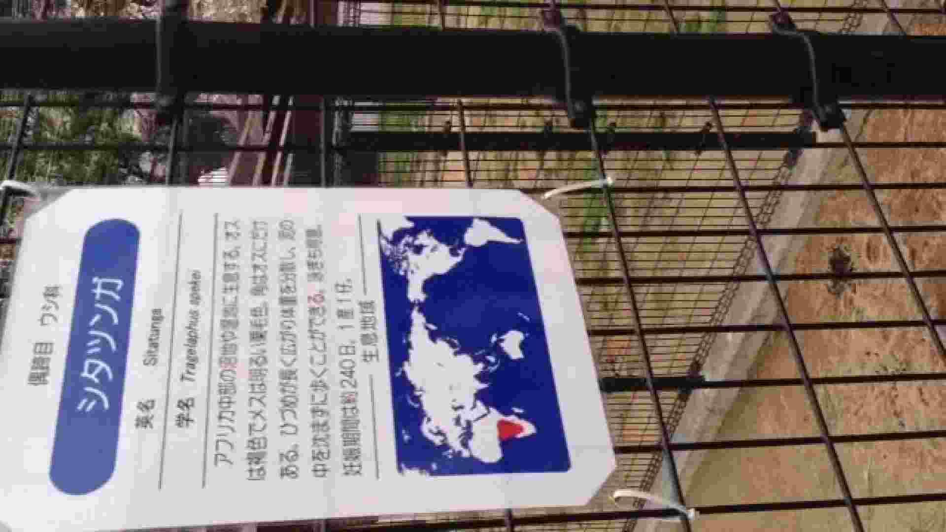 23(19日目)桜を見ながらお散歩 マンコ  91pic 26