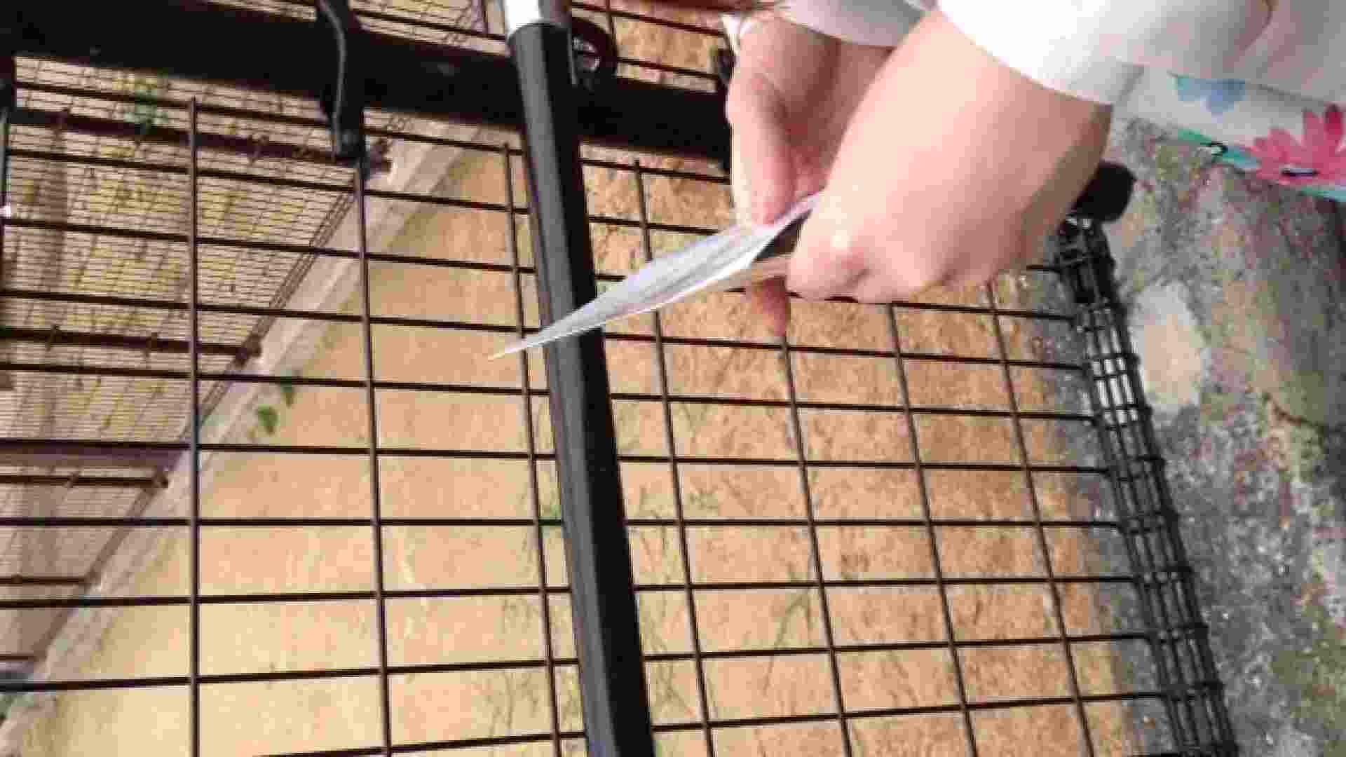 23(19日目)桜を見ながらお散歩 マンコ  91pic 29
