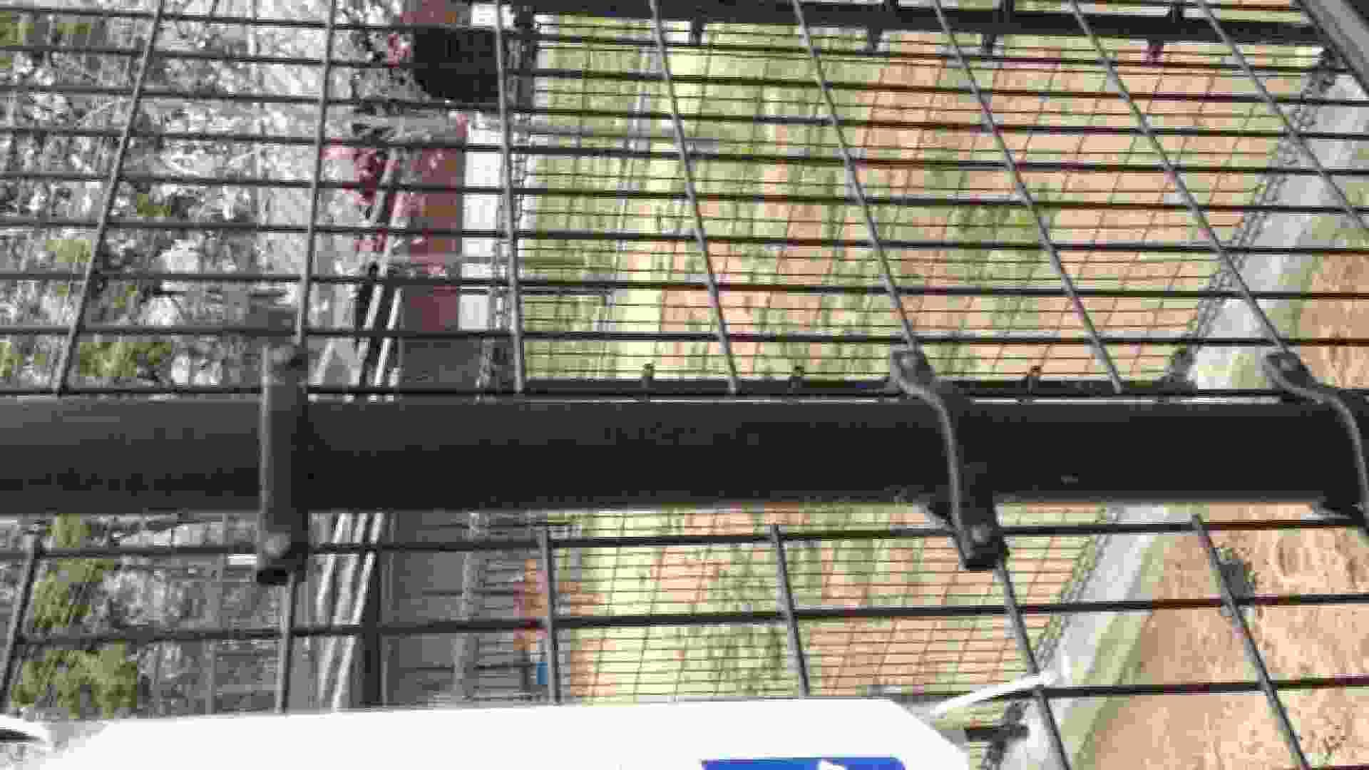 23(19日目)桜を見ながらお散歩 マンコ  91pic 32